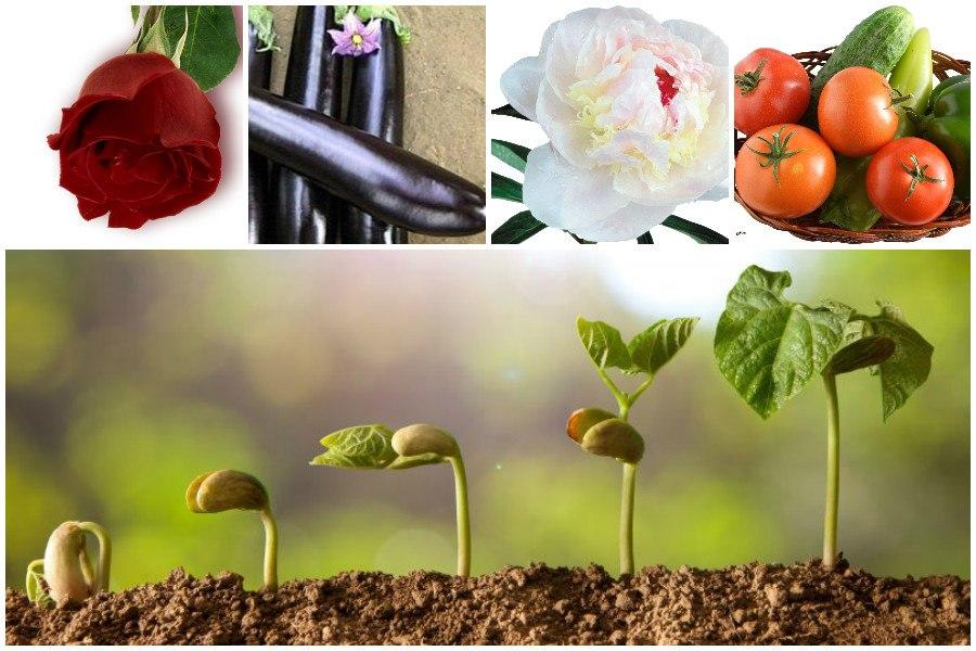 Подкормка растений брагой