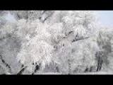 Раймонд Паулс. Зимняя сказка. Красивая музыка.