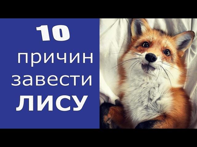 10 причин завести ЛИСУ! Смешные ЛИСЫ! MARY's NEWs