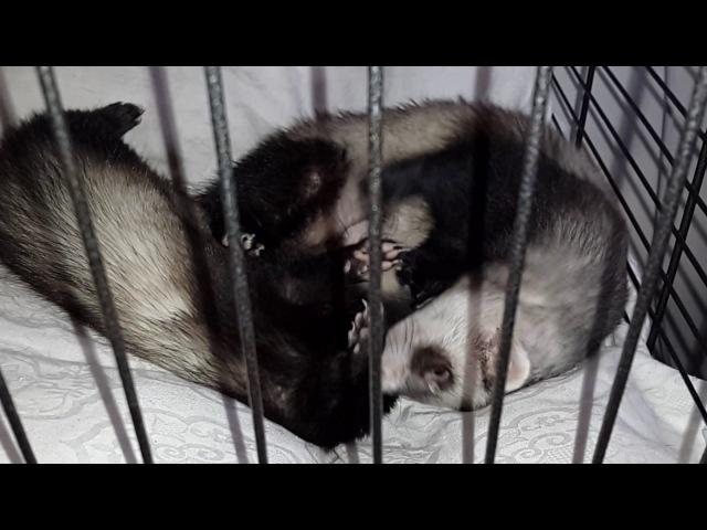 Аркуша и Люся - мои балавнушки!😃