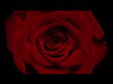 Sabrina Claudio - Tell Me x Too Much Too Late (Official Video)