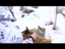 Совместная операция воронежских спасателей, полицейских и ветеринаров по отлову сбежавшего тигра