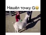 НЕ НУЖНО СПОРИТЬ С ШИНШИЛЛОЙ ИЗ ПОД  ИЗ РАЙ-СКИХ КУЩЕЙ)))))))))!!!!!!!!ОНА ВСЕ РАВНО ВАС ПЕРЕИГРАЕТ!!!