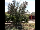 Обработка деревьев от тли Дезкомфорт Волгоград