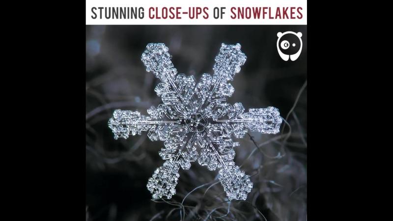 Stunning close-ups of snowflakes - Bored Panda