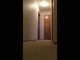 Gotcha_the_Cockatoo_running_on_the_floor_yelling_nonsense_at_everything!!_Very_funny!__ORIGINAL_Gotcha_The_Cockatoo49