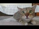 «Кальвадос» - «С добрым утром, алкаши!» (котики, мимими)