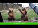 Дуже смішні приколи про тварин