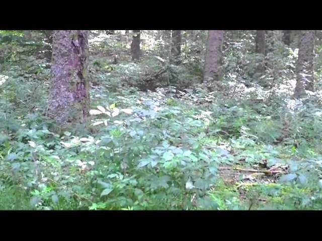 релаксация музыка, вода, природа, лес, отдых, тихий