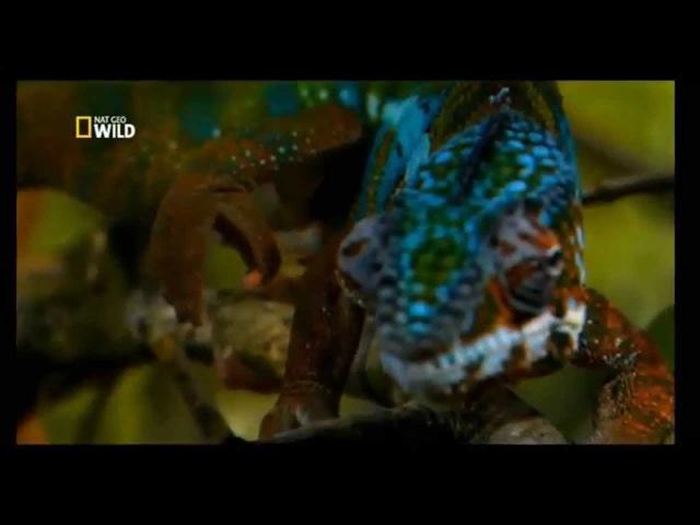Los Animales Mas Raros Del Mundo - National Geographic