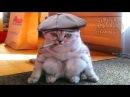 Смешные Коты и Кошки 2017 Приколы с Котами и Кошками 2017 Лучшие Приколы с Котами 10