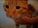 Official Video_ Cat Bath Freak Out -Tigger the cat says NO! to bath