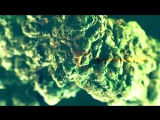 X-Perience - Magic Fields video-filmu.ru_publ_klipy_90_2