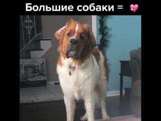 Большие собаки = 💖