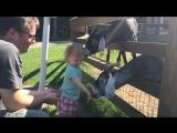 20 животных, отомстивших детям(Top Video)