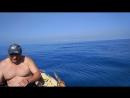 Лазаревское встреча с дельфинами