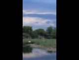 Вот такая красота живет на нашей речке