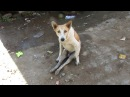Dog paralysed from car accident walks again ЗООЗАЩИТНИКИ