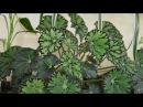 Комнатные растения. Подставка под цветок!