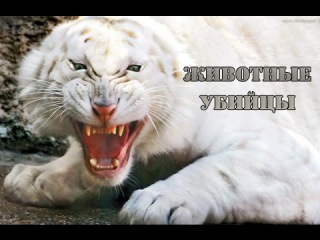 ТОП животных yбuйц человека. Самые опасные хищники на планете