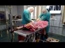 Операция при варусной деформации конечностей у собаки породы алабай
