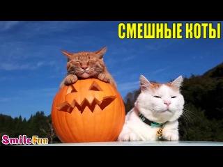 Смешные коты и кошки, Подборка приколов с котами и кошками 2016