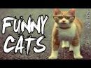 Смешные Коты 2017 ДО СЛЕЗ Приколы с котами и кошками 2017
