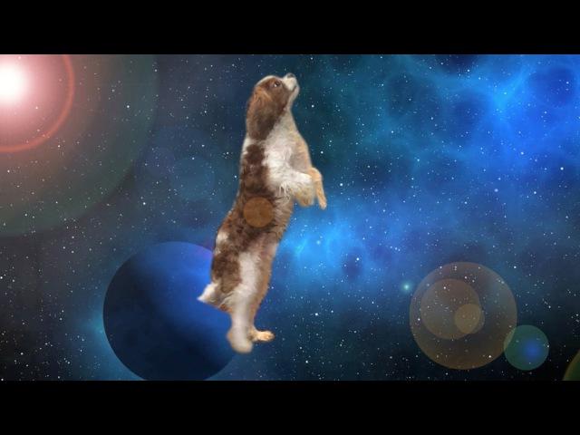 Apollo The Dog Travels Through Space Time - Shooting Stars Meme