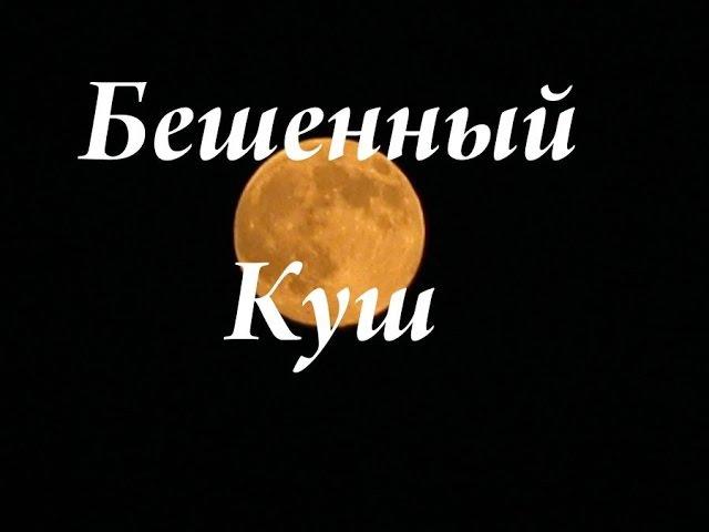 следствие вели с Леонидом Каневским - Бешенный куш