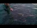 Мимимишки на море