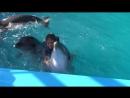Дельфины и русалка