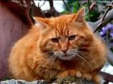 Геннадий Хазанов - Монолог домашнего кота