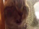 Кот-дурак