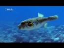 Самые Странные в Мире Животные   Чудаки в Океане  Документальный Фильм National Geographic