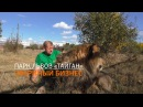 Парк львов Тайган Звериный бизнес