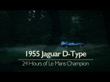 Jaguar D-Type 24 Hours Of Le Mans Champion