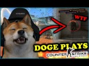 WHEN DOGE PLAYS CSGO! BEST OF DOG MOMENTS Stream, Fails, Rage Funny Moments