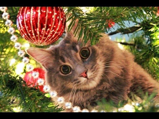 Кошки против елок НОВОЕ