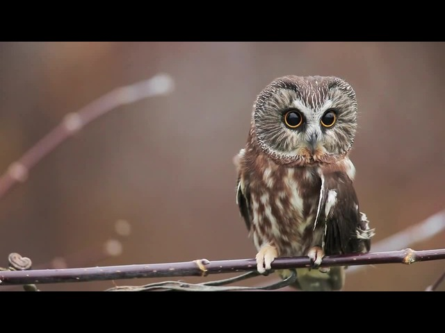 Owl-typewrighter (re: coub.com/view/txbc5)