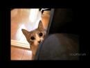 Приколы 2016 тест на психику, кто засмеётся тот псих Приколы с котами!!