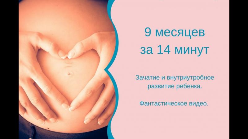 Зачатие ребенка и внутриутробное развитие. Фантастическое видео. 9 месяцев за 14 минут.
