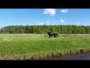 Настя В на Басурмане вольт на рыси в поле неудачные попытки подъема в галоп Щеглово 04 06 2017