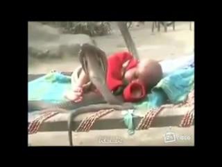 Кобры охраняют сон ребёнка ...