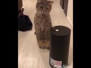 Купили увлажнитель воздуха - кота не слышно третий час