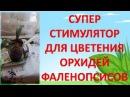 СУПЕР СТИМУЛЯТОР ДЛЯ ЦВЕТЕНИЯ ОРХИДЕЙ ФАЛЕНОПСИСОВ