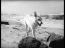 Другая женщина 1950 фильм