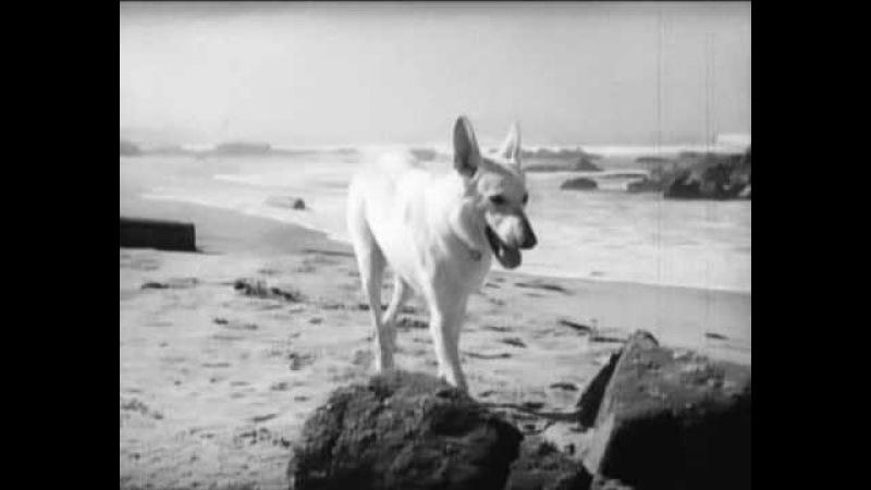 Другая женщина (1950) фильм