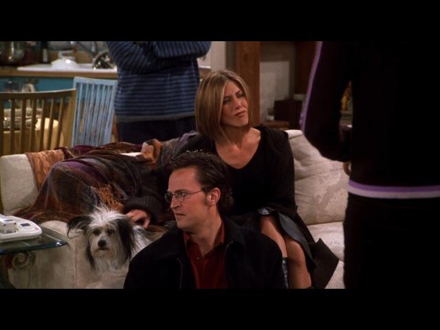 Friends - Chandler Doesn't Like Dogs