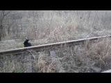 Macke - Cats - 20161211 154803