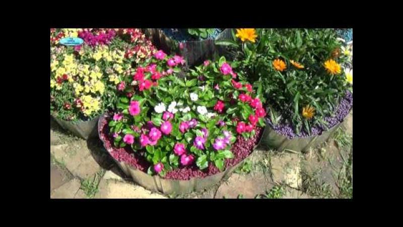 Многолетние цветы для клумбы. Фото
